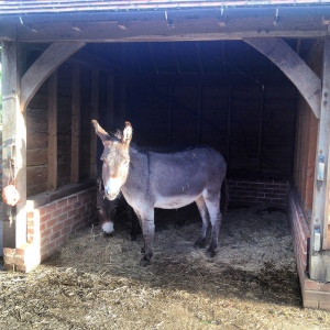 Magic and Monty are our beautifully behaved donkeys.  Their favorite things are hay nets and taking children for rides.