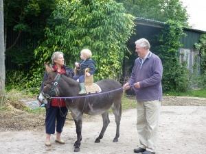 Donkey Rides 800